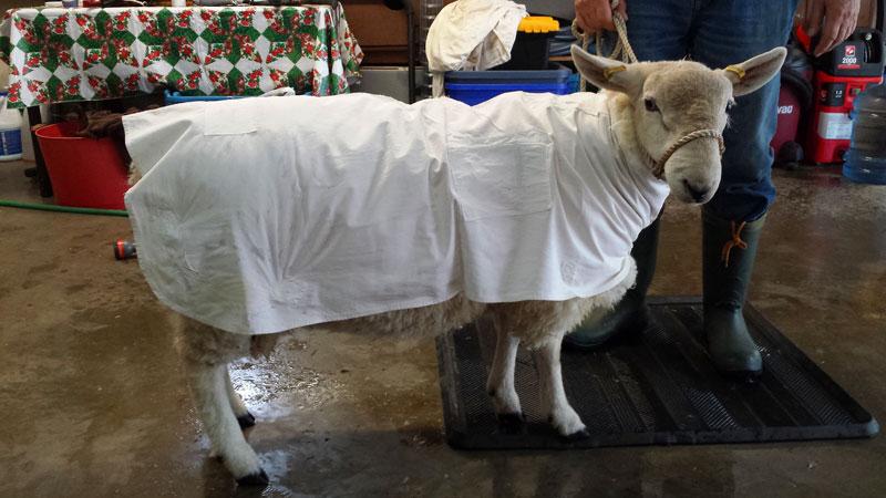 donald-clean-coat