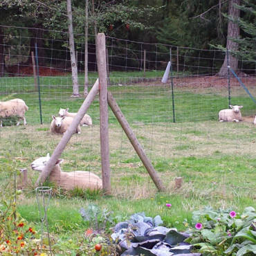 Sheep Shelter Work Party